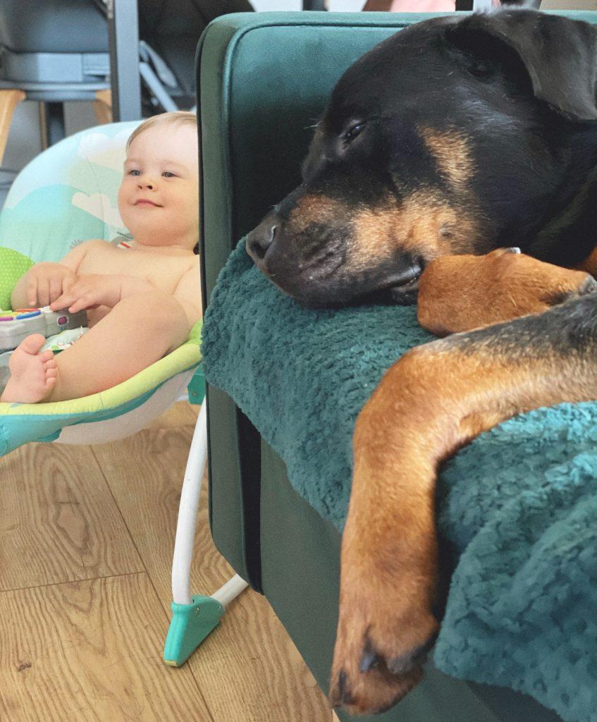 rottweiler i dziecko
